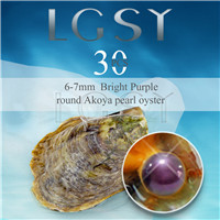 wholesale 6-7mm saltwater round Akoya bright purple pearl oyster 30pcs